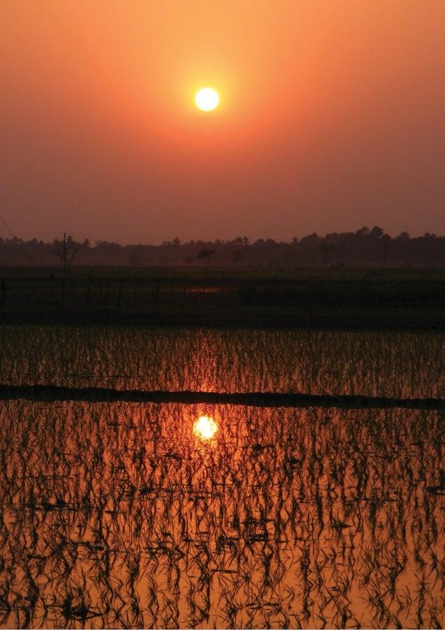 INFORME: La transición hacia una economía baja en carbono. Una mirada sobre el sector financiero y el sector alimentario