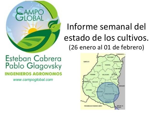 Informe semanal del estado de los cultivos. (26 enero al 01 de febrero)  www.campoglobal.com
