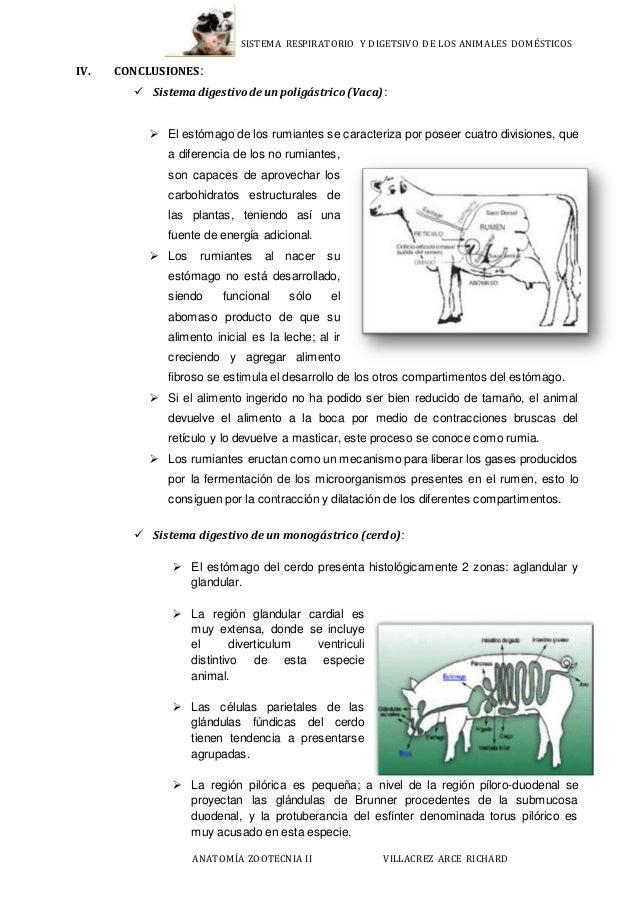 Informe de anatomía