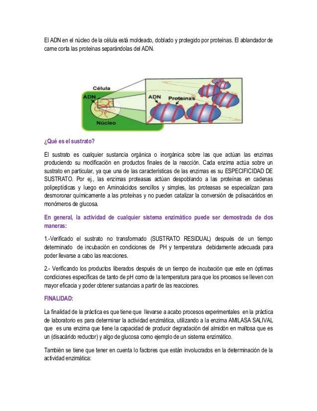 Informe de bioquimica 1 (1) Slide 3