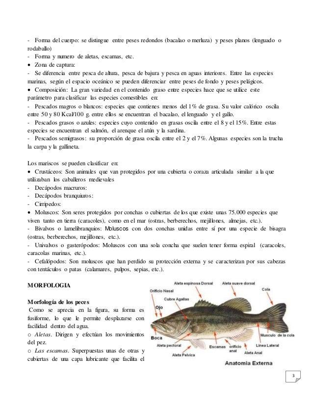 Informe sobre pescados y mariscos