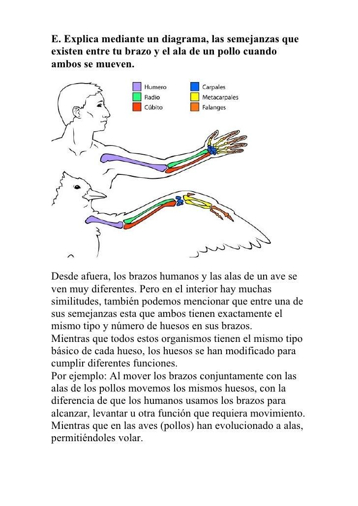 Informe de laboratorio de biología digna cisneros y zelideth moreno (…