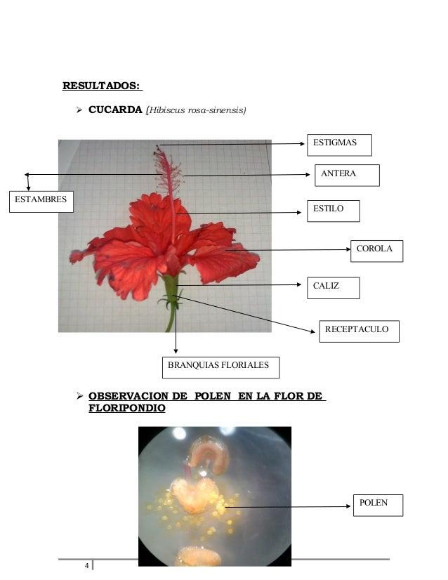 Informe de la flor