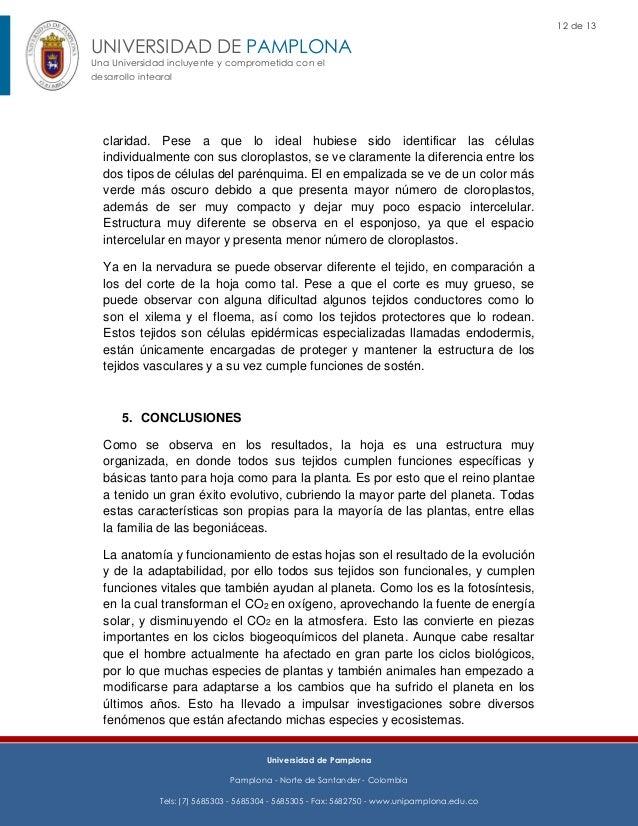 Morfoanatomia de las Hojas