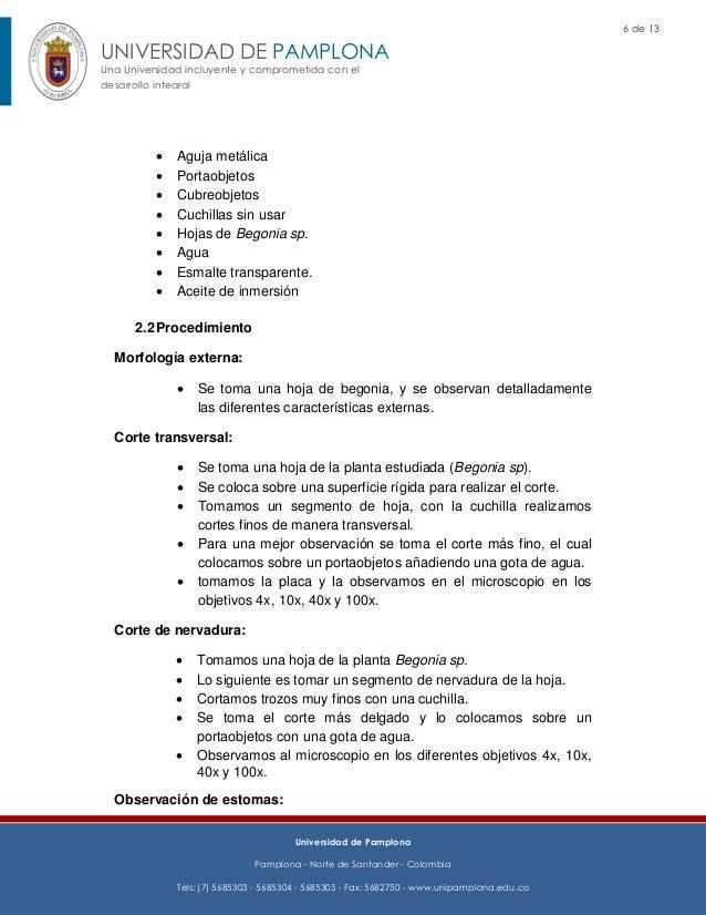 Atractivo Portaobjetos De Microscopio Anatomía Festooning - Anatomía ...