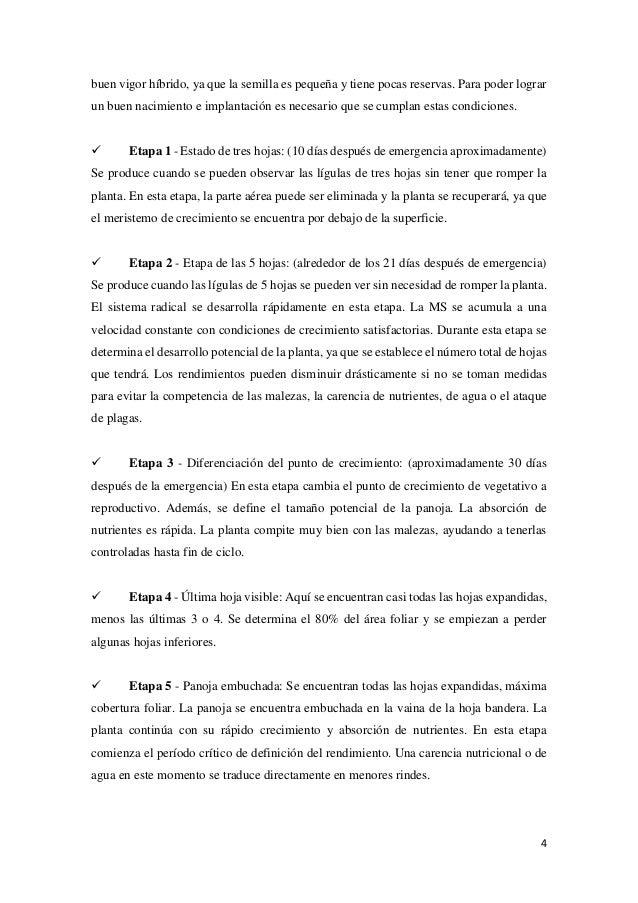Informe de sorgo pdf