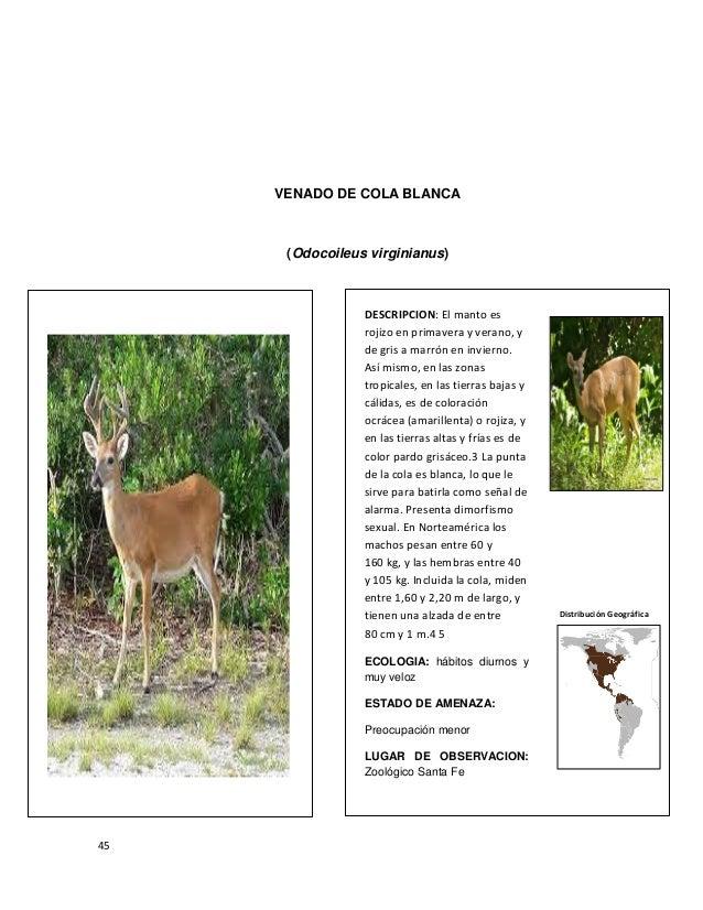 Vistoso Anatomía De Un Ciervo Componente - Imágenes de Anatomía ...