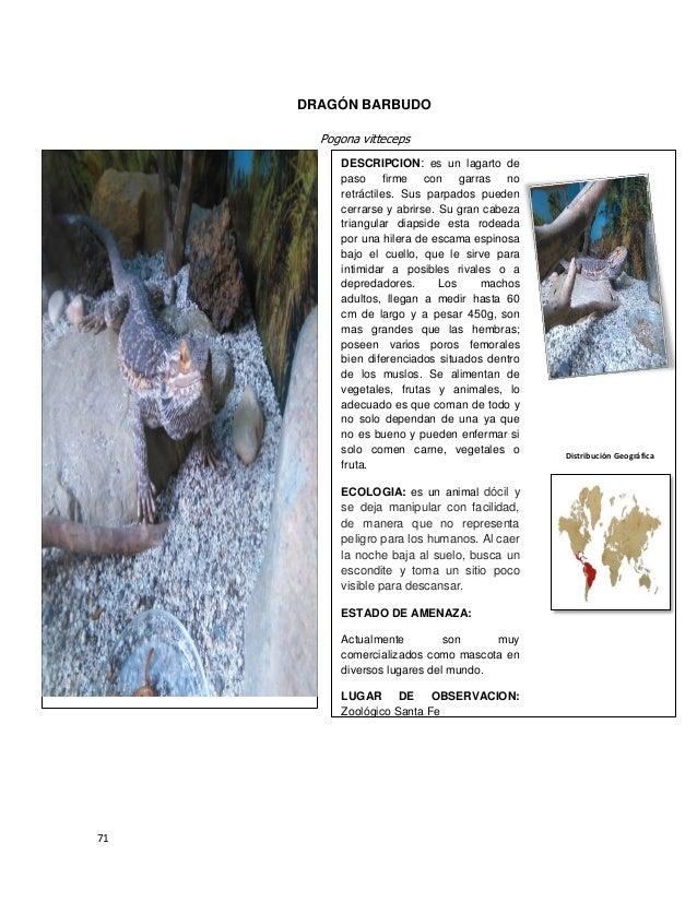 Bonito Anatomía Dragón Barbudo Ilustración - Anatomía de Las ...