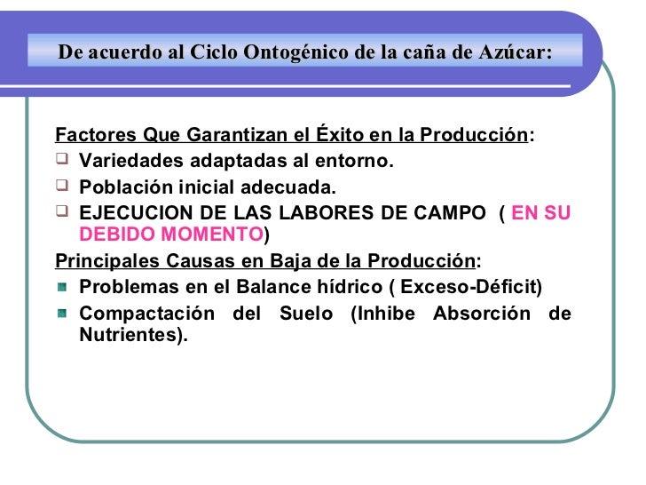 <ul><li>Factores Que Garantizan el Éxito en la Producción : </li></ul><ul><li>Variedades adaptadas al entorno. </li></ul><...