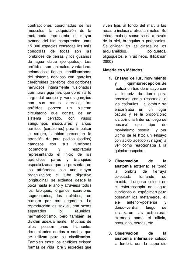 IDENTIFICACION Y ANALISIS MORFOLOGICO DE INDIVIDUOS DEL PHYLUM ANNEL…