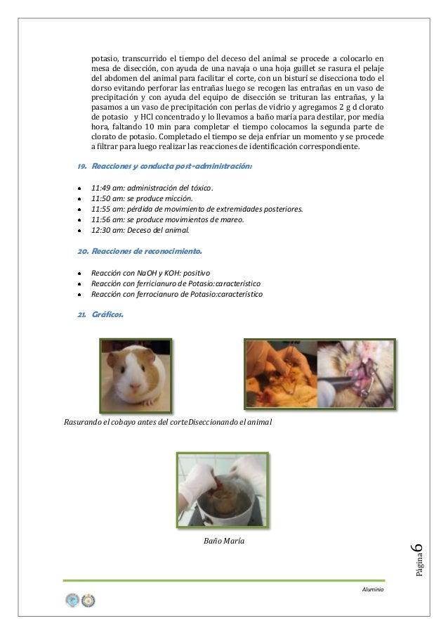 potasio, transcurrido el tiempo del deceso del animal se procede a colocarlo en mesa de disección, con ayuda de una navaja...