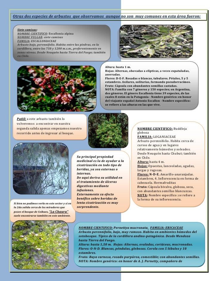 Informe sobre salidas al bosque - Nombres de arbustos ...