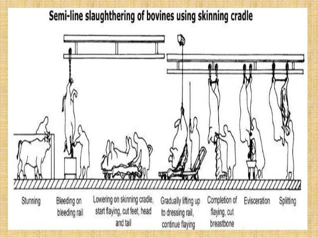 infrastructure-req-of-modern-slaughterhouse-55-638 Usda Slaughter Farm House Plans on fruit slaughter house, meat slaughter house, home slaughter house, kosher slaughter house, texas slaughter house, livestock slaughter house, un slaughter house,