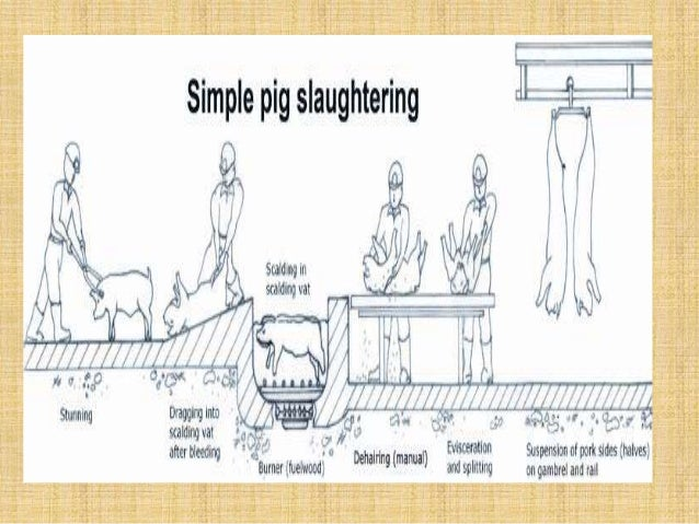 infrastructure req of modern slaughterhouse