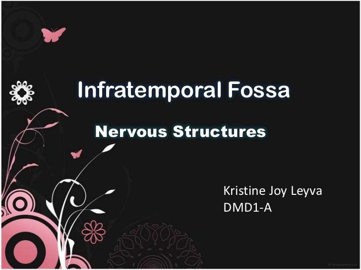 Infratemporal Fossa Nervous Structures              Kristine Joy Leyva              DMD1-A