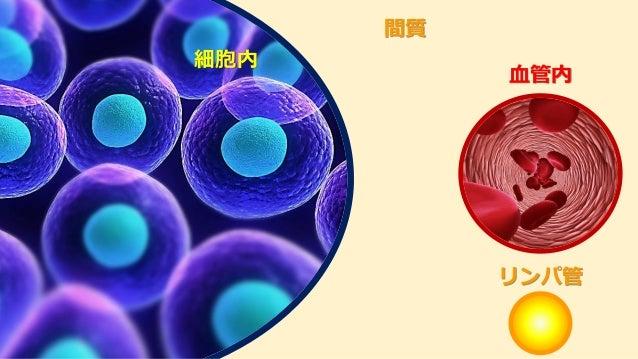 細胞内 間質 血管内 リンパ管