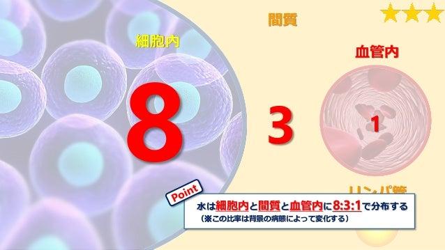 リンパ管 間質 血管内 細胞内 3 1 水は細胞内と間質と血管内に8:3:1で分布する (※この比率は背景の病態によって変化する)
