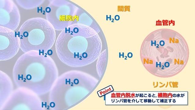 リンパ管 間質 血管内 細胞内 Na NaNa 細胞内 H2O H2O H2O H2O H2O H2O H2O H2O H2O H2O H2O H2O H2O 血管内脱水が起こると, 細胞内の水が リンパ管を介して移動して補正する