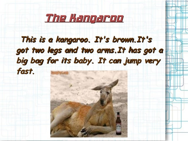 The KangarooThe KangarooThis is a kangaroo. Its brown.ItsThis is a kangaroo. Its brown.Itsgot two legs and two arms.It has...