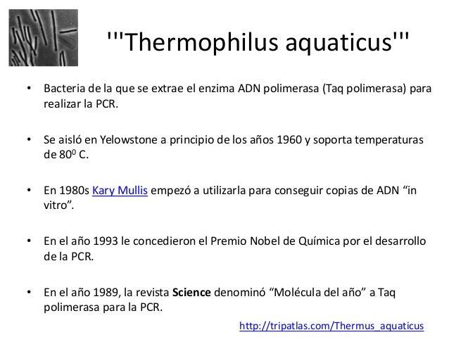 http://www.mhhe.com/sem/Spanish_Animations/sp_polymerase_chn_reactn.swf                                      PCR  http://w...