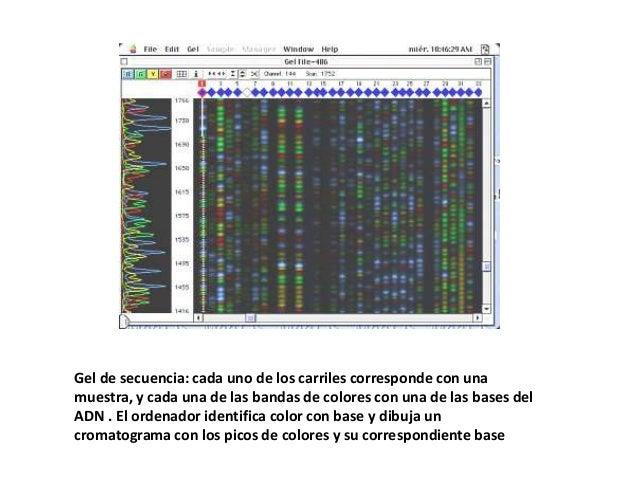Secuenciaciónhttp://www.phgfoundation.org/tutorials/dna/5.htmlhttp://www.phgfoundation.org/tutorials/dna/4.html