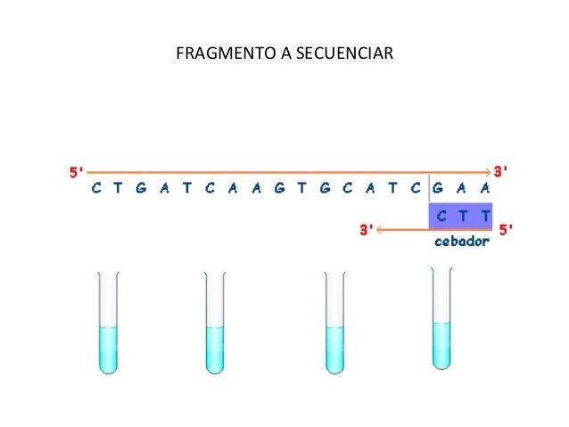 Detección de mutaciones     Método de diagnóstico rutinario (relación entre enfermedad y mutación puntual)Secuenciación...