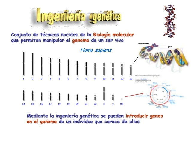 Molécula A                         Molécula B                     Digestión de ambas moléculas con la                     ...