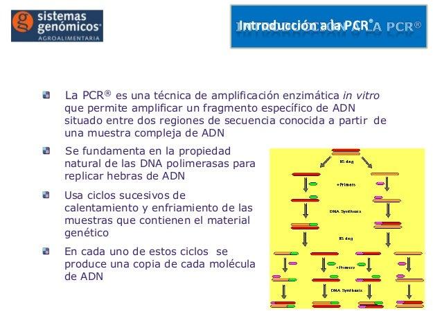Introducción a la PCR®La PCR® es una técnica de amplificación enzimática in vitroque permite amplificar un fragmento espec...
