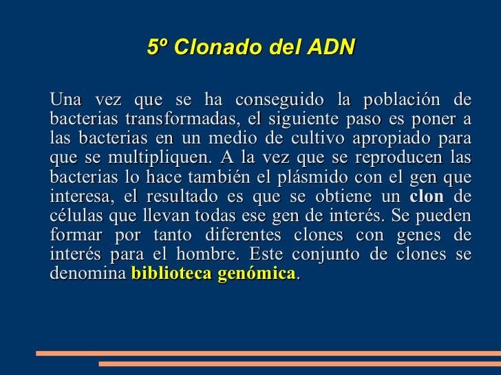 <ul>3º IDENTIFICACIÓN DEL VECTOR DE CLONACIÓN   </ul><ul>Además del  origen de replicación , los vectores de clonación deb...