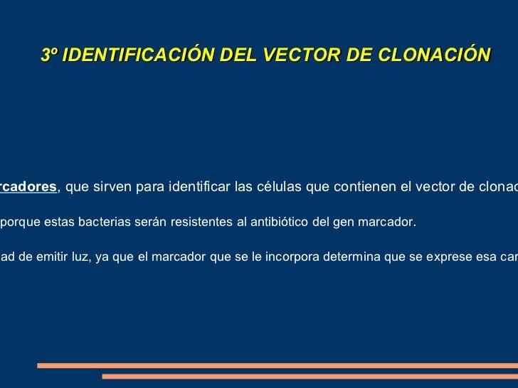 <ul><li>Esta inserción se realiza en  vectores de clonado , que son los agentes transportadores capaces de introducirlos e...