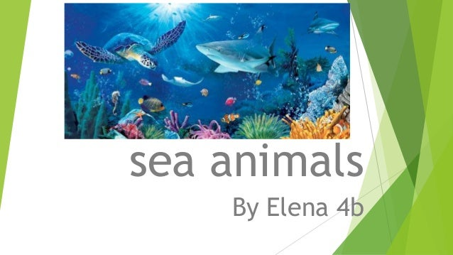 sea animals sea animals By Elena 4b