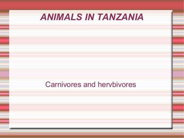 ANIMALS IN TANZANIA Carnivores and hervbivores