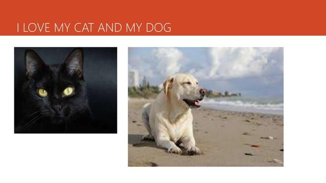 I LOVE MY CAT AND MY DOG