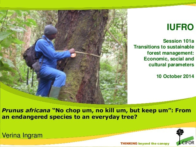 THINKING beyond the canopy THINKING beyond the canopy IUFRO Session 101a Transitions to sustainable forest management: Eco...
