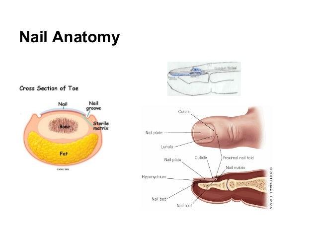 Proper Treatment Of Ingrown Toenail Dr Donald Pelto