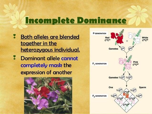 AP Biology Inheritance and chromosomal mutations – Chromosomal Mutations Worksheet