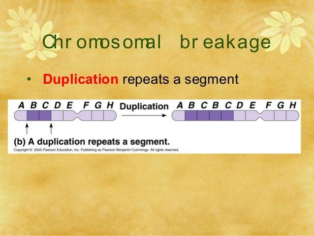 RESEARCH COMMUNICATION Chromosomal Breakage in ...