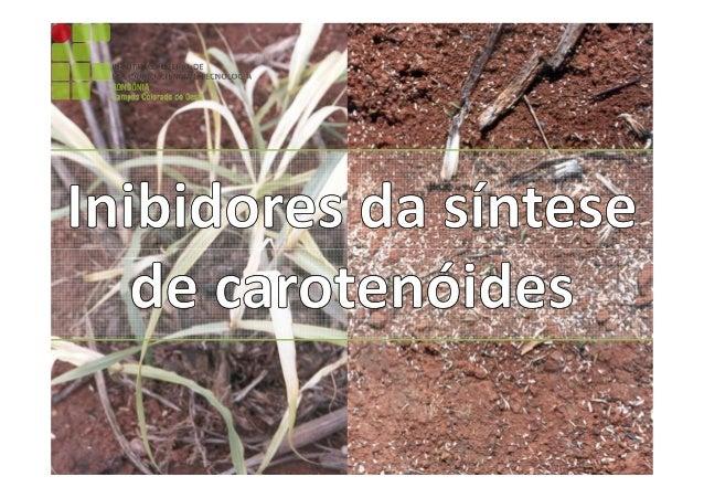 Inibidores da síntese de carotenóides Discente: Dayenne Mariane Herrera  Disciplina: Biologia e Manejo de Plantas Daninhas...