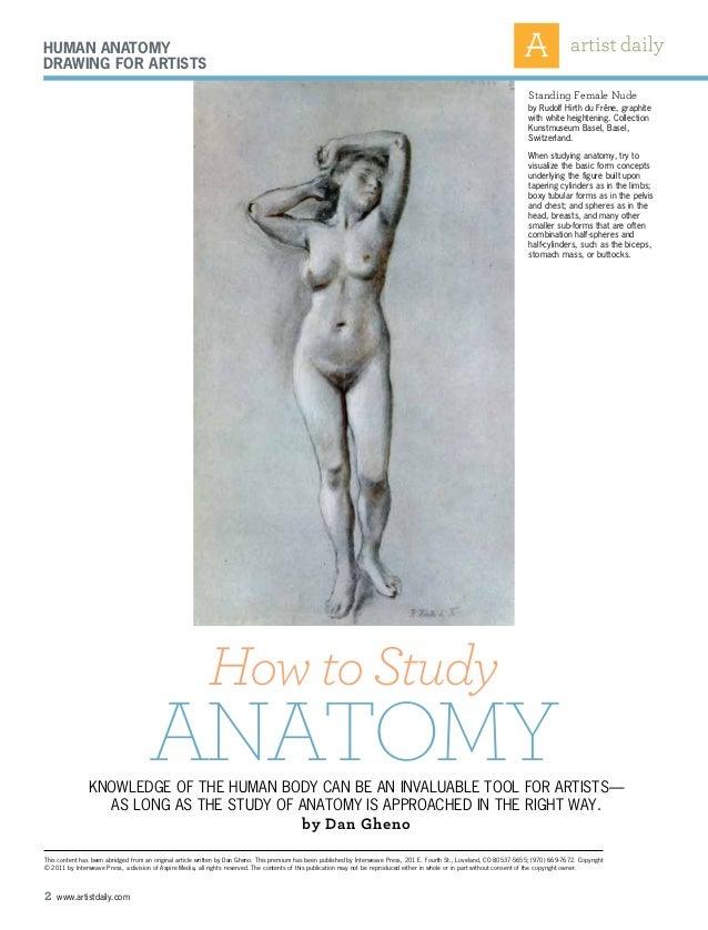 Iniciación drawing anatomy Slide 2