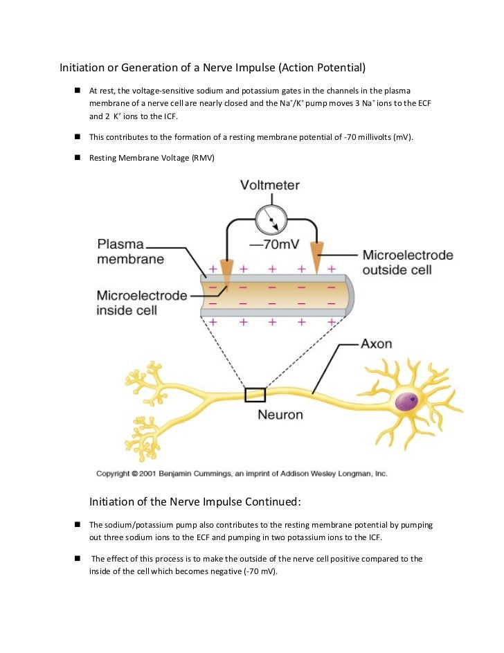 Initiation or Generation of a Nerve Impulse (Action Potential)   At rest, the voltage-sensitive sodium and potassium gate...