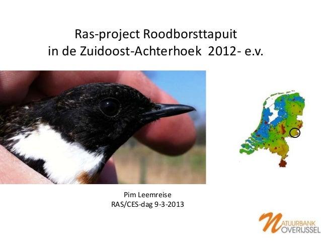 Ras-project Roodborsttapuitin de Zuidoost-Achterhoek 2012- e.v.             Pim Leemreise          RAS/CES-dag 9-3-2013