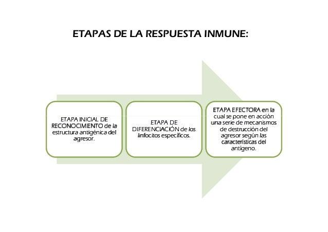 ETAPAS DE LA RESPUESTA INMUNE:                                                         ETAPA EFECTORA en la    ETAPA INICI...