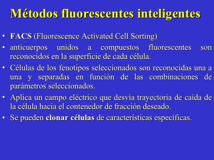 Métodos fluorescentes inteligentes  <ul><li>FACS  (Fluorescence Activated Cell Sorting)  </li></ul><ul><li>anticuerpos uni...