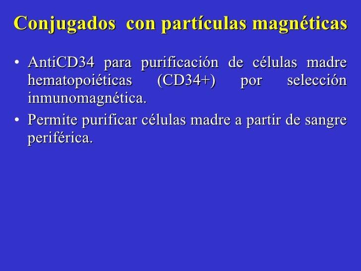 Conjugados  con partículas magnéticas <ul><li>AntiCD34 para purificación de células madre hematopoiéticas (CD34+) por sele...