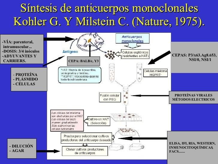 Síntesis de anticuerpos monoclonales Kohler G. Y Milstein C. (Nature, 1975). -  PROTEÍNA - PLÁSMIDO - CÉLULAS  -VÍA: paren...