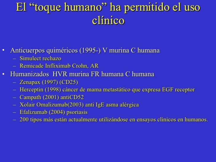 """El """"toque humano"""" ha permitido el uso clínico <ul><li>Anticuerpos quiméricos (1995-) V murina C humana </li></ul><ul><ul><..."""