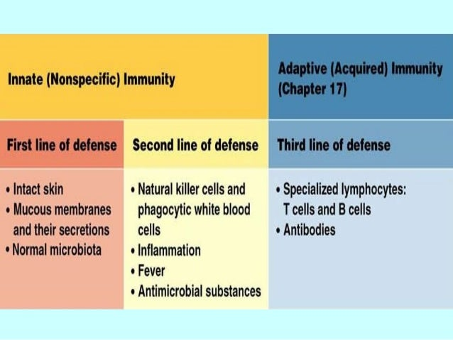 Innate Immunity Nonspecific Defenses Of The Host Final