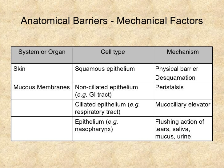 mechanical barrier against infection Body defenses body defenses  physical barriers  the human body has several lines of defense against infection, which work to prevent germs from invading the.