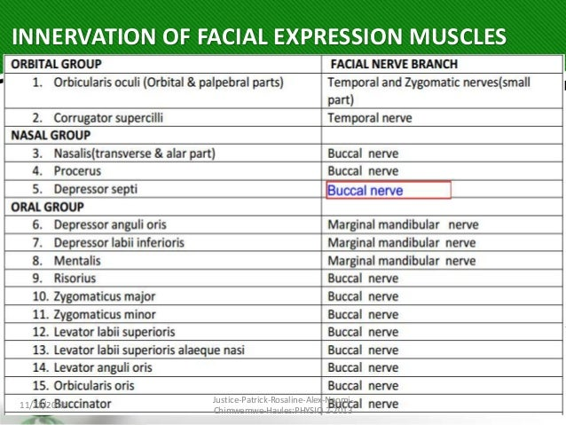 Facial muscles number