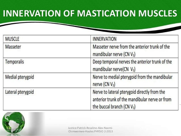 Muscles of facial expression action innervation